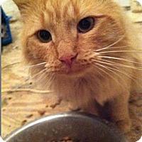 Adopt A Pet :: Casanova - Pittstown, NJ