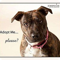 Adopt A Pet :: Rachel - ADOPTED - kennebunkport, ME