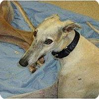 Adopt A Pet :: Simon - Vidor, TX