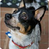 Adopt A Pet :: Kira - Siler City, NC