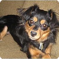 Adopt A Pet :: Sadie - Commerce City, CO