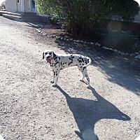 Adopt A Pet :: Sadie - Chewelah, WA