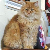 Adopt A Pet :: Princess Nicole - Davis, CA