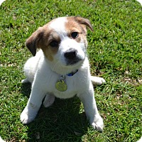 Adopt A Pet :: Carly - Knoxville, TN