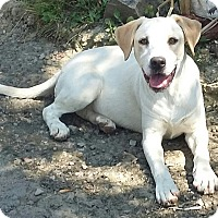 Adopt A Pet :: Sunny - Columbus, IN