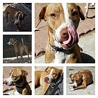 Adopt A Pet :: Littles - Sacramento, CA