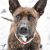Adopt A Pet :: Mya - Lockport, NY