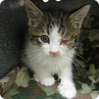 Adopt A Pet :: Captain Hook - Irving, TX