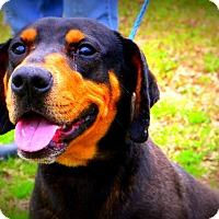 Adopt A Pet :: Hank ~ meet me! - Glastonbury, CT