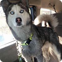 Adopt A Pet :: Annie - LAKEWOOD, CA