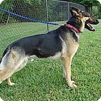 Adopt A Pet :: CARL - ROCKMART, GA