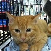 Adopt A Pet :: Jeffery - Riverside, RI