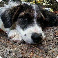 Adopt A Pet :: Baby Mona - Marlton, NJ
