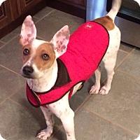 Adopt A Pet :: Eddie and Ava - Marietta, GA