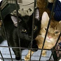 Adopt A Pet :: Sven - Byron Center, MI