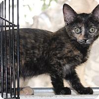 Adopt A Pet :: Ketchikan - North Highlands, CA