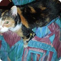 Adopt A Pet :: Birdie - Medina, OH
