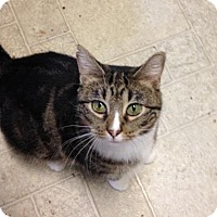 Adopt A Pet :: Nixie - Fishers, IN