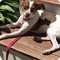 Adopt A Pet :: Carmella - Acushnet, MA