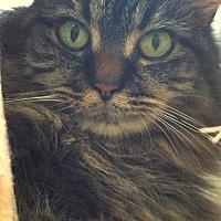 Adopt A Pet :: Socks - Huguenot, NY