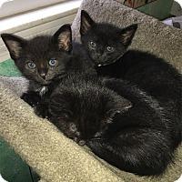 Adopt A Pet :: Pepper - N. Billerica, MA