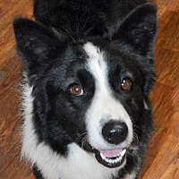 "Adopt A Pet :: Finnie Finnagan""I'm Adopted"" - Minerva, OH"