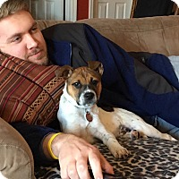 Jack Russell Terrier Mix Puppy for adoption in Nashville, Tennessee - Skipper