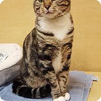 Adopt A Pet :: Porshe - El Cajon, CA