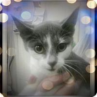 Adopt A Pet :: Marlena - Trevose, PA