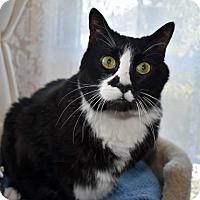 Adopt A Pet :: Old Man Jack - Bristol, CT