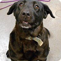 Adopt A Pet :: Bailey - Lancaster, PA