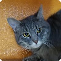 Adopt A Pet :: Cutie - Elyria, OH