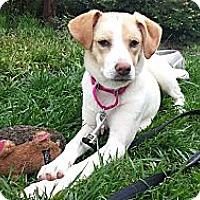 Adopt A Pet :: Clover REDUCED FEE - Plainfield, CT