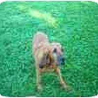 Adopt A Pet :: SPICE - Georgetown, KY