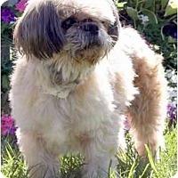 Adopt A Pet :: Cesar-NC - Chapel Hill, NC