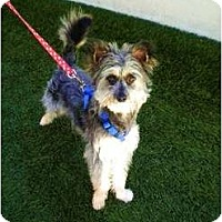 Adopt A Pet :: Berkeley - Mission Viejo, CA