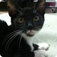Adopt A Pet :: Ross - Trevose, PA