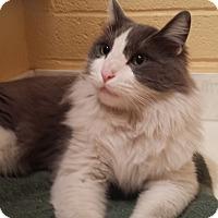 Adopt A Pet :: Albert Von Streusel - Phoenix, AZ