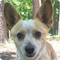 Adopt A Pet :: Rue - Brattleboro, VT