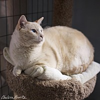 Adopt A Pet :: Earl - Los Angeles, CA
