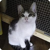 Adopt A Pet :: Leslie TG - Schertz, TX
