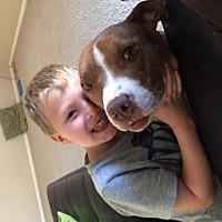 Adopt A Pet :: JAVA - Chandler, AZ