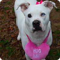 Adopt A Pet :: Aliya - Bishopville, SC