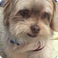 Adopt A Pet :: Elroy - Thousand Oaks, CA