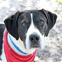 Adopt A Pet :: Hank - Loxahatchee, FL