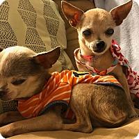 Adopt A Pet :: macho - haslet, TX