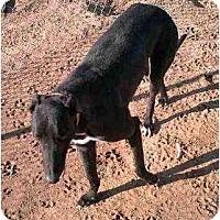 Adopt A Pet :: Zeus (Chasmo's Zeus) - Chagrin Falls, OH