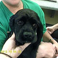 Adopt A Pet :: Jake - Menomonee Falls, WI