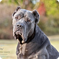 Adopt A Pet :: Seamus**Med Hold** - Virginia Beach, VA