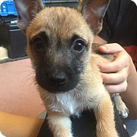 Adopt A Pet :: Zander - Morgantown, WV